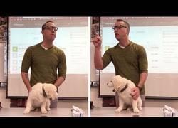 Enlace a La amenaza de un profesor estadounidense a sus alumnos: matar a un cachorro si no ganan un concurso