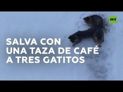 Utiliza café para salvar a tres gatos que habían quedado atrapados en el hielo