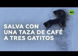 Enlace a Utiliza café para salvar a tres gatos que habían quedado atrapados en el hielo