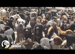 Enlace a Un hombre adopta a 750 perros