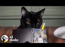 Enlace a Si los gatos escribieran su propio diario