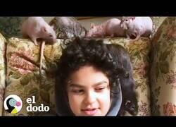 Enlace a La familia que no puede dejar de adoptar ratas