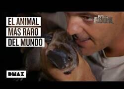 Enlace a Wild Frank encuentra el animal que llevaba 40 años buscando