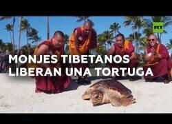 Enlace a Una tortuga marina regresa al mar bendecida por unos monjes tibetanos