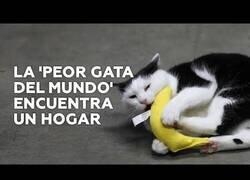 Enlace a Una familia adopta a la conocida como 'peor gata del mundo'