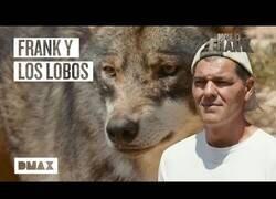 Enlace a Wild Frank camina junto a lobos en Antequera