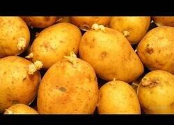 Enlace a ¿Qué pasa si dejamos patatas un año sin tocarlas?