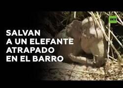 Enlace a La población de Camboya une fuerzas para salvar a un elefante atrapado