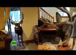 Enlace a Multan a una mujer por acoger ciervos en su casa