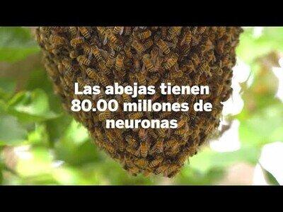 Nuevo descubrimiento sobre la inteligencia de las abejas