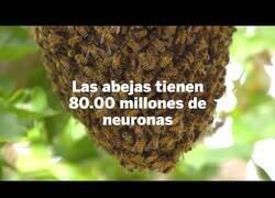 Enlace a Nuevo descubrimiento sobre la inteligencia de las abejas
