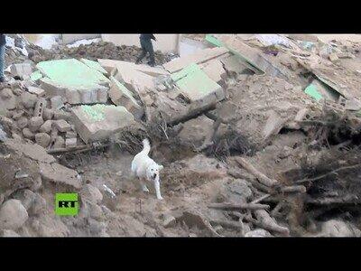 Perro de rescate busca supervivientes tras los terremotos de Turquía