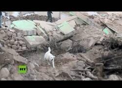 Enlace a Perro de rescate busca supervivientes tras los terremotos de Turquía