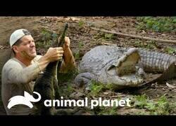 Enlace a Wild Frank y sus encuentros con cocodrilos