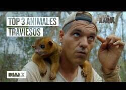 Enlace a Los animales más traviesos que Wild Frank se ha encontrado en México