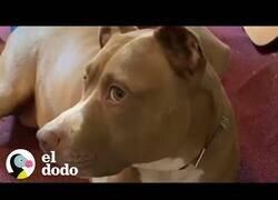 Enlace a Si los perros pudieran hablar
