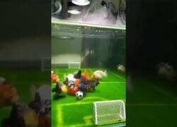 Enlace a Peces jugando a fútbol