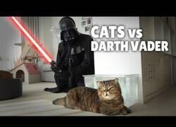 Enlace a ¿Cómo reaccionan los gatos ante la presencia de Darth Vader?