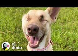 Enlace a Una perrita que no tiene impedimentos para ser feliz a pesar de ser ciega