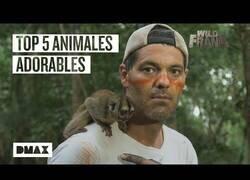 Enlace a Los 5 animales más adorables que Wild Frank se ha encontrado en Brasil