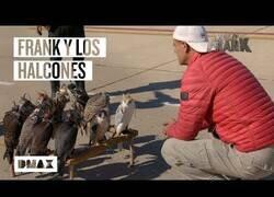 Enlace a Así trabajan los halcones de seguridad en la base aérea de Torrejón de Ardoz