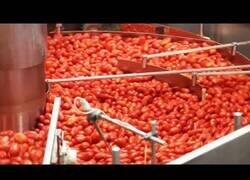 Enlace a Así es el proceso de envasado y procesamiento de los alimentos