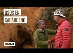 Enlace a Miguel Ángel Revilla reta a Wild Frank a medirse con osos cántabros