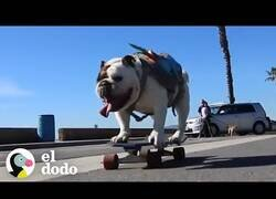 Enlace a La bulldog skater