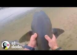 Enlace a Un hombre rescata a 3 tiburones con sus propias manos
