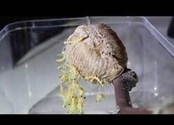 Enlace a Así es el nacimiento de la mantis religiosa