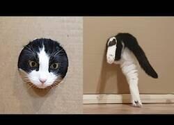 Enlace a Reduciendo el agujero de entrada de un gato