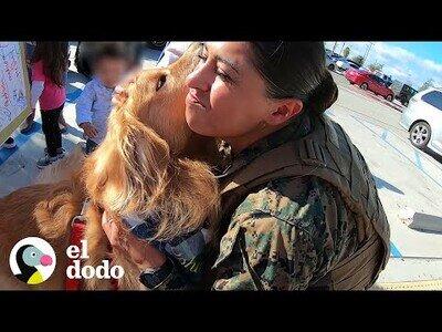 Un perro se emociona al ver a su 'mamá' más de un año después