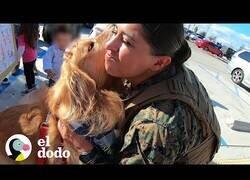 Enlace a Un perro se emociona al ver a su 'mamá' más de un año después