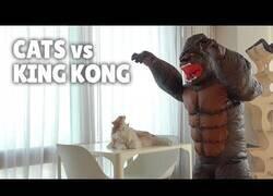 Enlace a ¿Cómo reaccionan los gatos cuando les persigue King Kong?