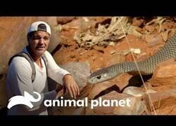 Enlace a Wild Frank se encuentra con una de la serpientes más peligrosas del mundo