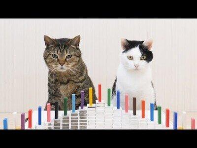 Gatos reaccionando al efecto Dominó