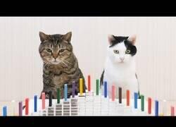 Enlace a Gatos reaccionando al efecto Dominó
