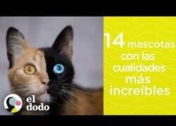 Enlace a 14 mascotas con increíbles cualidades