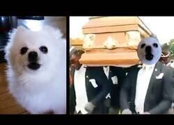 Enlace a El meme del ataúd: Versión perro