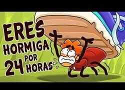 Enlace a ¿Qué pasaría si te convirtieses en una hormiga por un día?