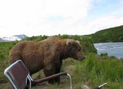 Enlace a Un oso se sienta a observar el río junto a un montañista