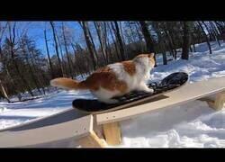 Enlace a El gato snowboarder