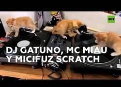 Enlace a Estos gatos pinchan como auténticos DJ's