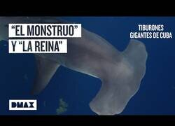 Enlace a En busca de tiburones gigantes en zonas peligrosas de Cuba