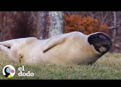 Enlace a Una foca aparece en el patio de una casa