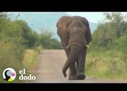 Enlace a Un elefante se acerca a saludar a un grupo de personas