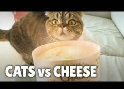 Enlace a ¿A los gatos les gusta el queso?