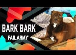 Enlace a Los mejores fails de perros