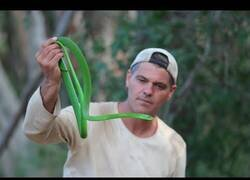 Enlace a Frank Cuesta nos enseña las serpientes más venenosas del mundo