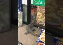 Enlace a Un lagarto gigante intenta colarse en un establecimiento